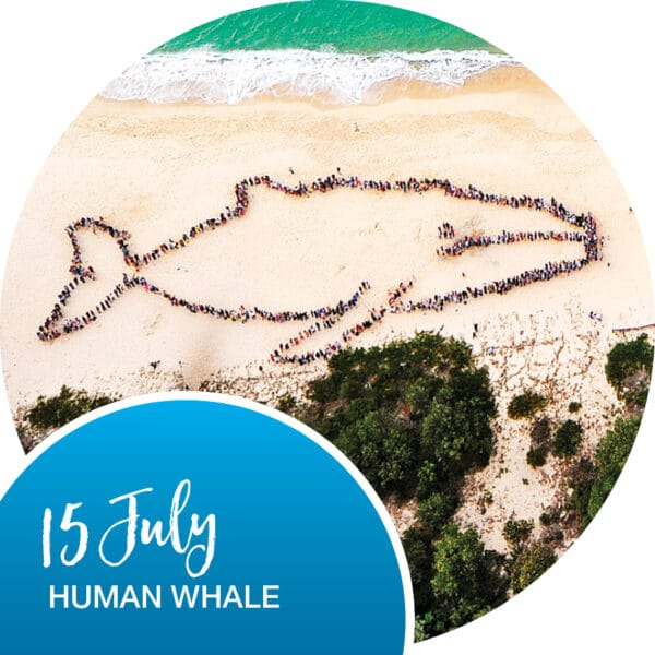 port stephens naturefest human whale - The Retreat Port Stephens
